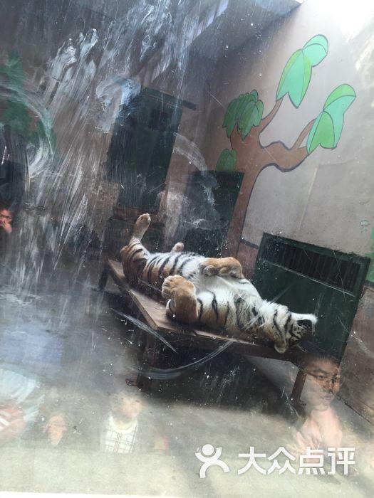 天津动物园的全部评价-天津-大众点评网