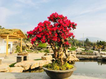 曹山紫竹林生态农业园