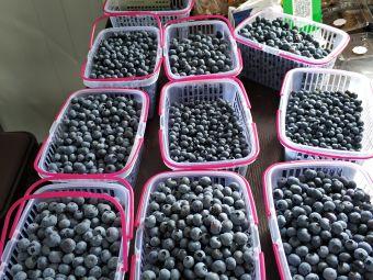 绿佳蓝莓树莓采摘园