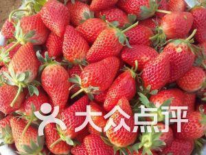 泊于草莓采摘园