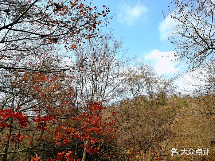 栖霞山名胜风景区红枫树图片 - 第5603张