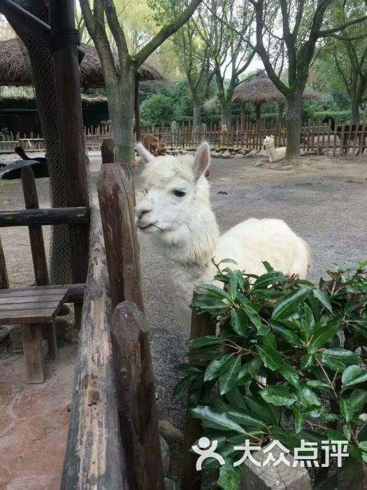 上海野生动物园图片 - 第3张
