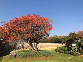 南非猶太博物館