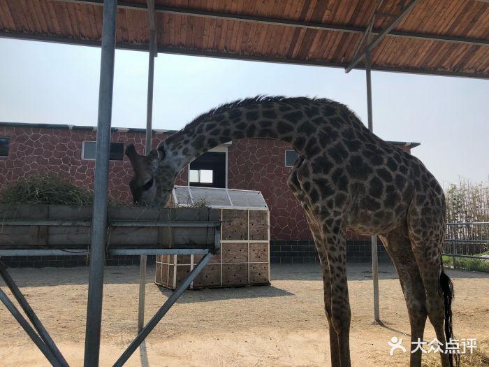 台州湾野生动物园图片 - 第9张