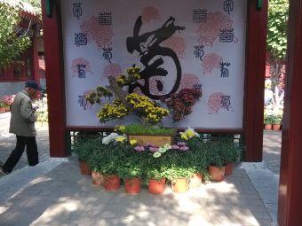 凤凰山菊花展