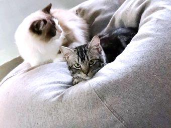 猫咖•豆包上的阿喵喵