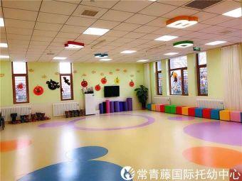 常青藤國際幼兒園
