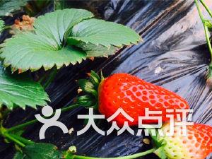 一诚草莓园