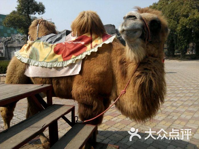 上海野生动物园图片 - 第11305张