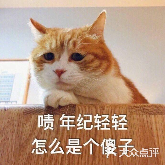 壁纸 动物 狗 狗狗 猫 猫咪 小猫 桌面 690_690