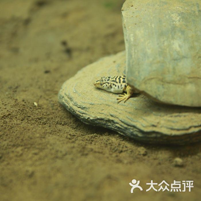两栖爬行动物馆图片-北京动物园-大众点评网
