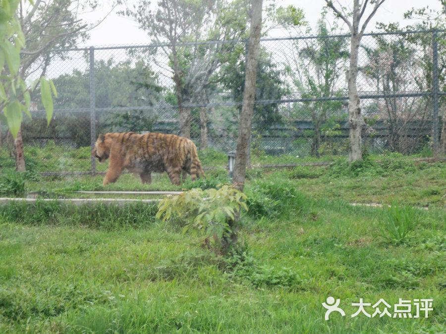 东莞寮步香市动物园m_1334036812997图片 - 第3张
