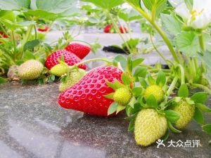 草莓岛休闲农庄