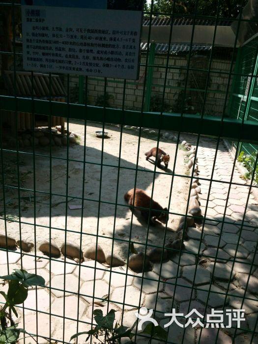 西双版纳热带动物园图片 - 第60张