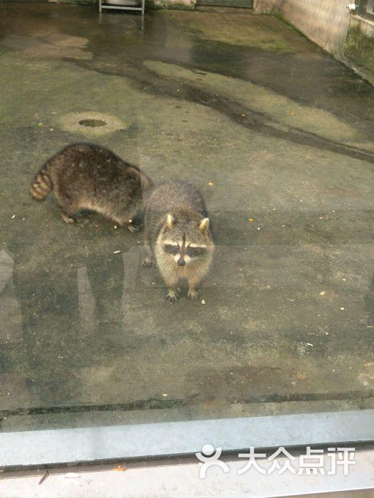 泰州市动物园图片 - 第4张