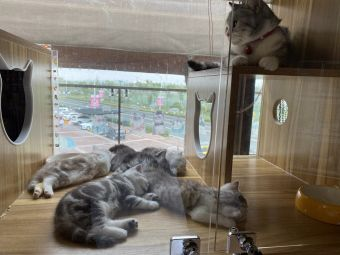 柒宝宠物生活馆