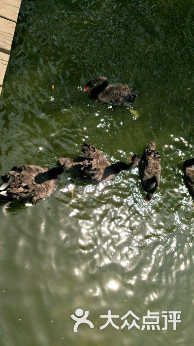 长白岛森林公园-图片-沈阳周边游-大众点评网
