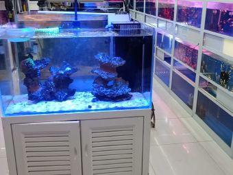 鱼之家水族