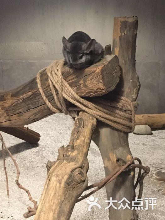 天津zoonly动物主题公园图片 - 第26张