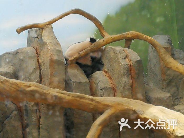 宿州野生动物园图片 - 第2张