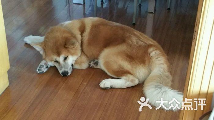 宠宠熊宠物美容(古北店)图片 - 第3张