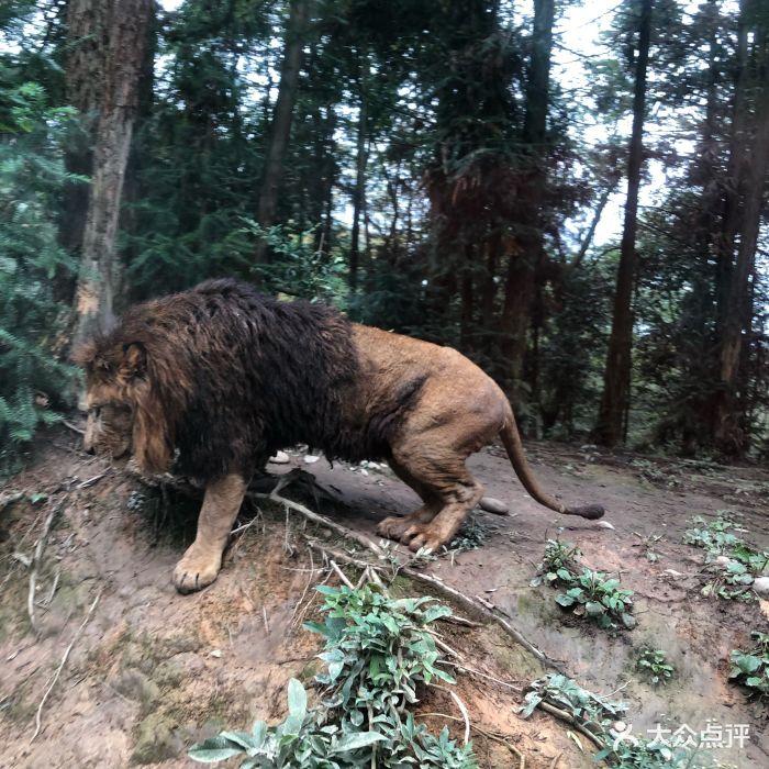 碧峰峡野生动物园图片 - 第23张