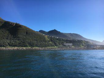 豪特灣海豹島