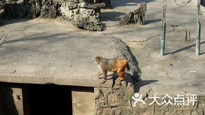 宜昌儿童公园动物园图片 - 第8张