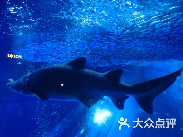 八景岛海岛乐园-图片-横滨休闲娱乐-大众点评网