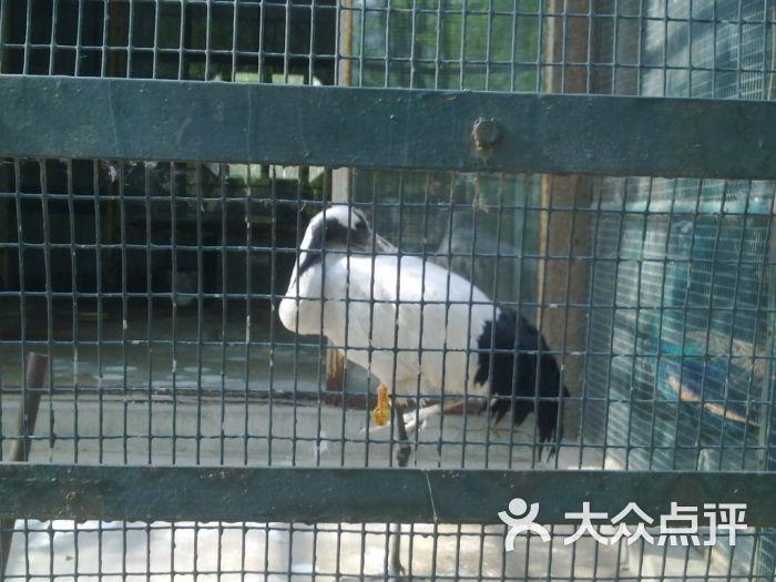 天津动物园-20110502238图片-天津周边游-大众点评网
