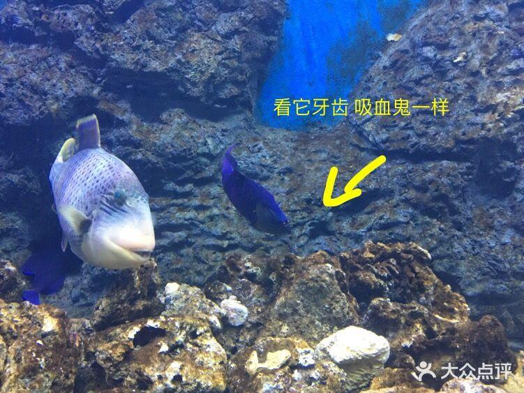 嗒咪动物奇幻乐园(杭州店)图片 - 第121张