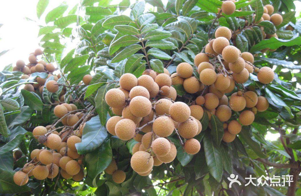 壁纸 矢量 水果 小果 植物 1024_667