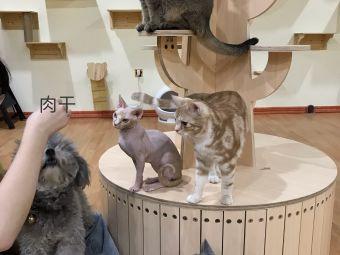 有猫の店·猫咪主题咖啡厅