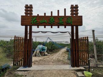 花山桑葚园