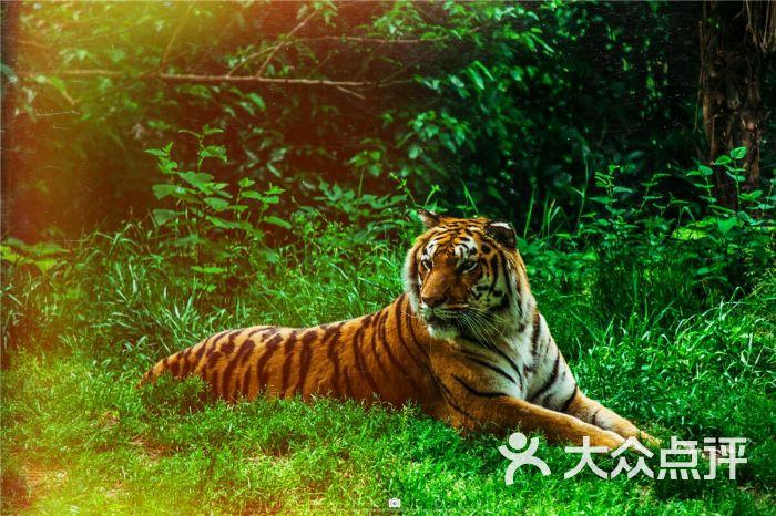 武汉动物园的全部评价-武汉-大众点评网