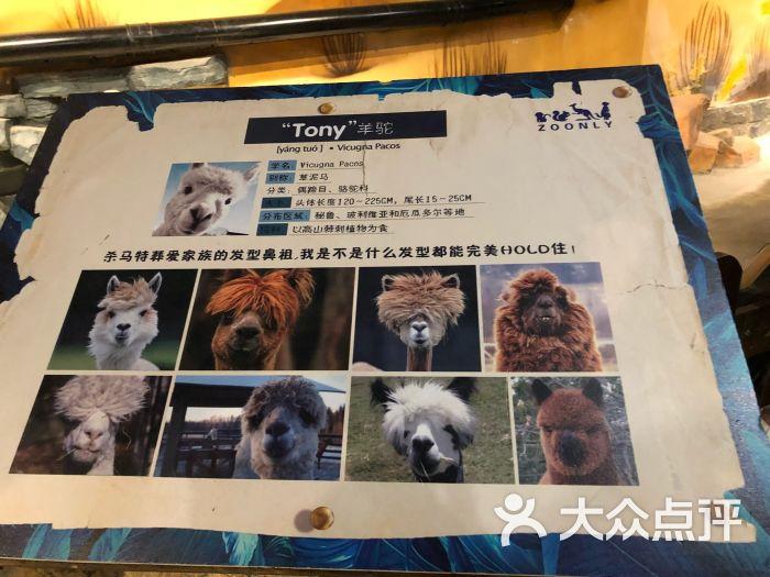 天津zoonly动物主题公园图片 - 第18张