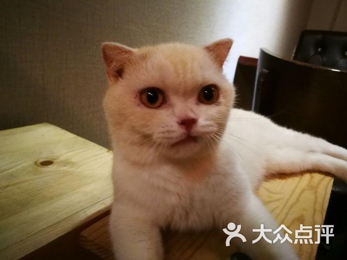 贝斯特宠物猫咪咖啡馆图片 - 第170张