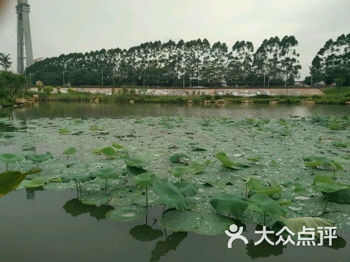 半月岛湿地公园-图片-佛山周边游-大众点评网