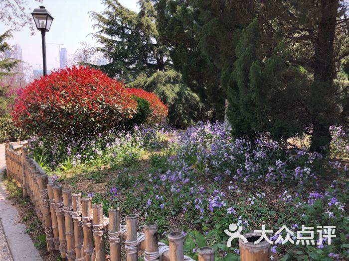 青岛植物园图片 - 第48张