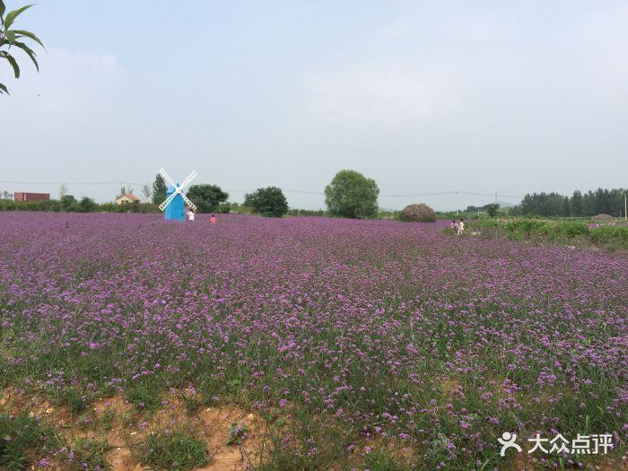 紫海蓝山薰衣草庄园图片 - 第123张