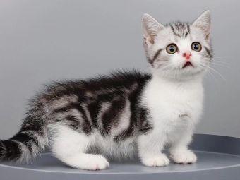 黄晓明宠猫舍