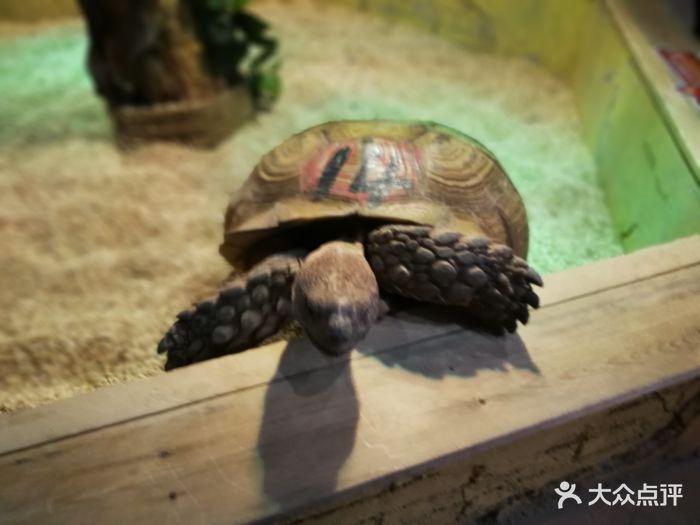 未来动物城主题公园图片 - 第35张