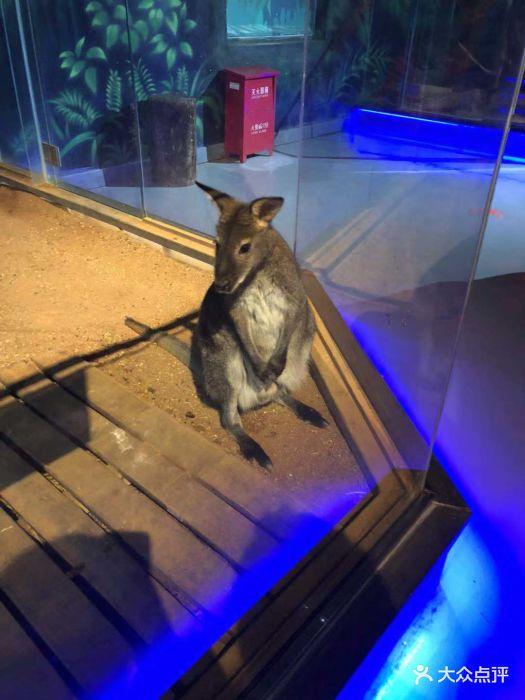 未来动物城动物主题公园图片