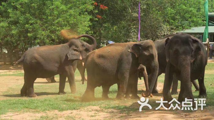 壁纸 大象 动物 700_394