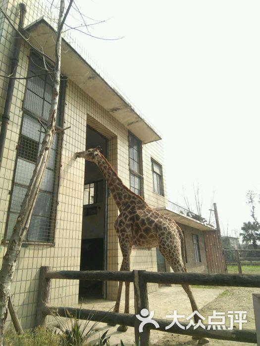 成都动物园图片 - 第4张