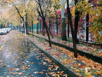 新疆大学-计算中心