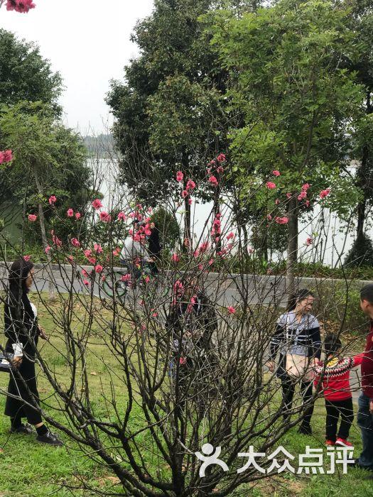 东莞生态园图片 - 第6张