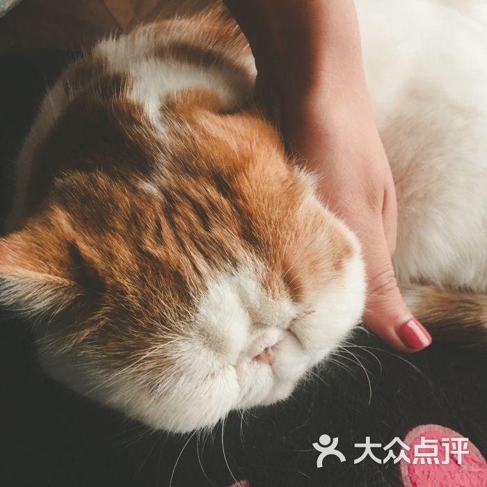 壁纸 动物 猫 猫咪 小猫 桌面 700_700