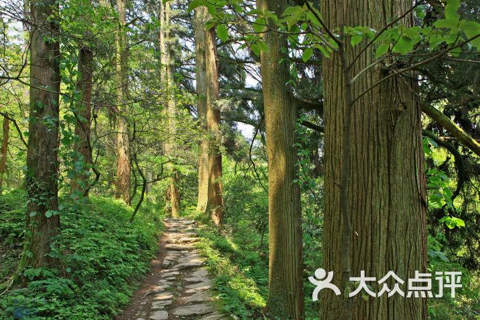 壁纸 风景 森林 桌面 700_467