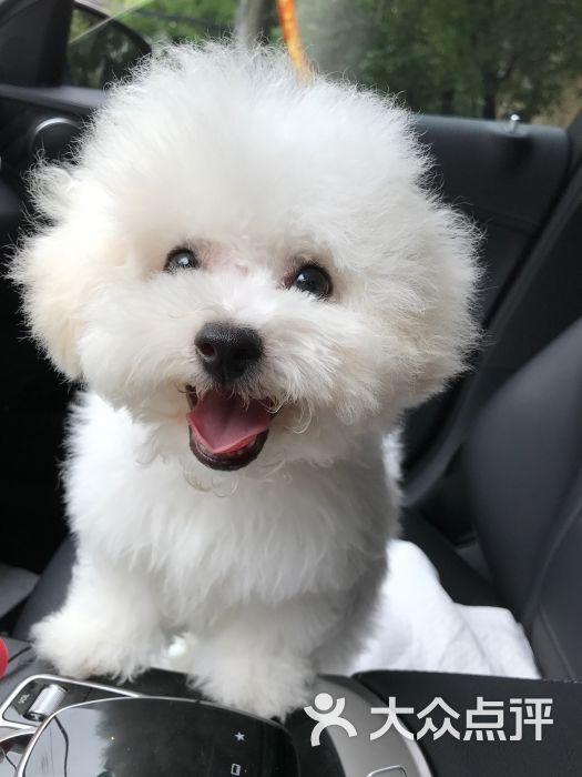 petdog派多格宠物图片 - 第1张图片